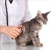 Ветеринарные клиники в Лопатино
